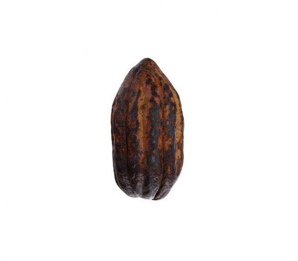 خرید اینترنتی میوه کاکائو